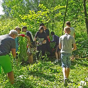 Aktionstage im Natura 2000-Gebiet: Mehrerauer Seeufer – Bregenzerachmündung